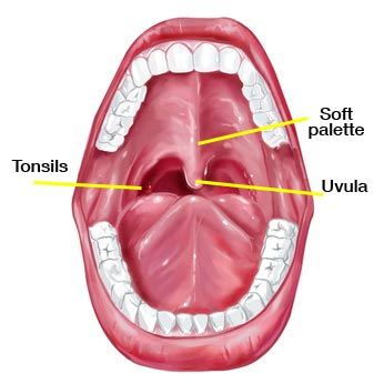 mouth diagram showing the tonsils, uvula, and soft palette