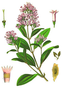 Quinine occurs naturally in the bark of the cinchona tree, but should not be used for nocturnal leg cramps.